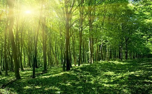 林木保险的保险责任有哪些?「保险知识」
