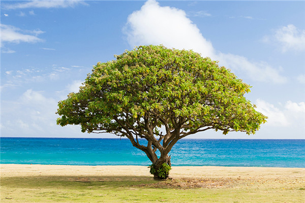 华夏常青树有什么基础保障?值不值得买?