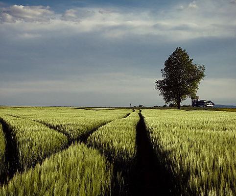 大麦定期寿险和大麦正青春这个新品怎么样?好不好啊?